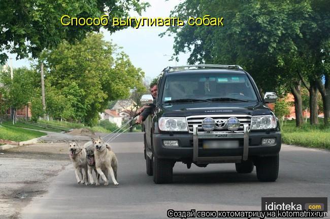 Котоматрица: Способ выгуливать собак