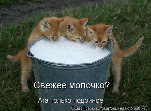Котоматрица: Ага только подоиное Свежее молочко?