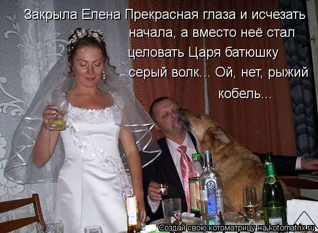 Котоматрица: Закрыла Елена Прекрасная глаза и исчезать начала, а вместо неё стал целовать Царя батюшку серый волк... Ой, нет, рыжий кобель...
