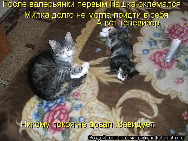 Котоматрица: После валерьянки первым Пашка оклемался  Милка долго не могла придти в себя  А вот телевизор ............ Никому покоя не довал .Завидует.