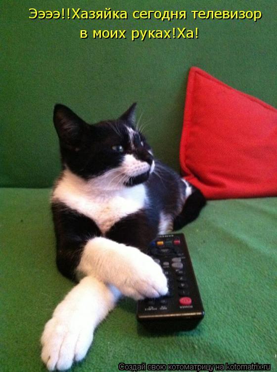 Котоматрица: Ээээ!!Хазяйка сегодня телевизор в моих руках!Ха!