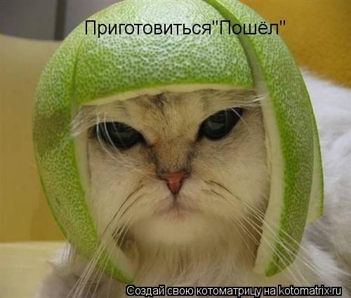"Котоматрица: Приготовиться""Пошёл"""