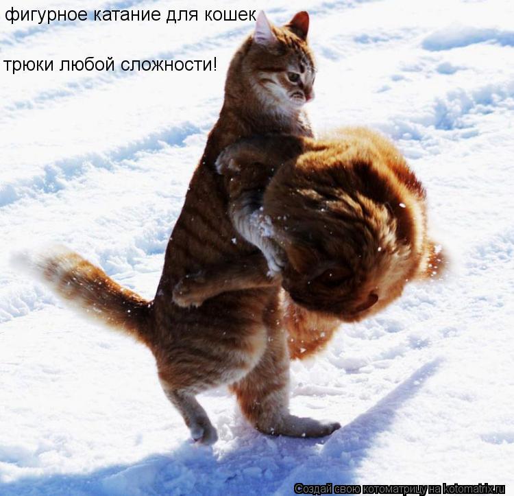 Котоматрица: фигурное катание для кошек трюки любой сложности!