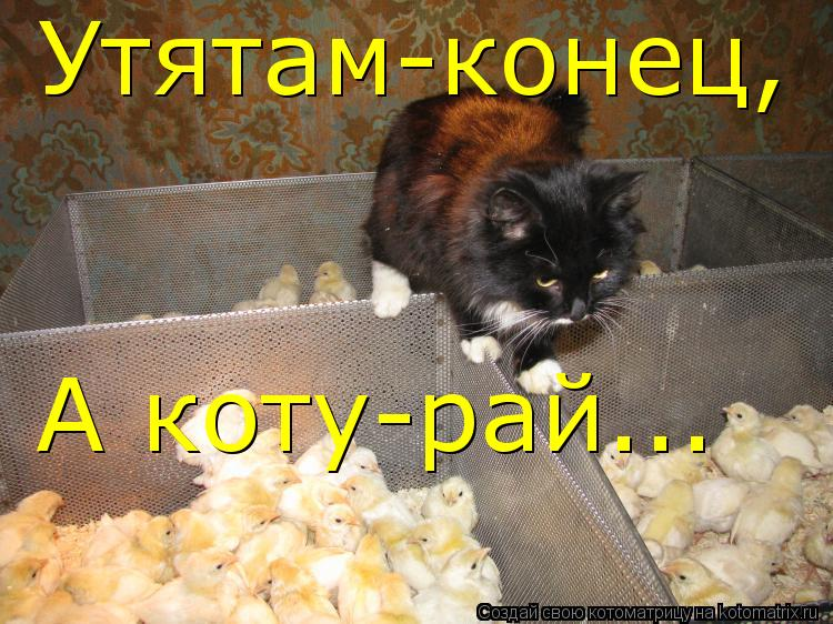 Котоматрица: Утятам-конец, А коту-рай...