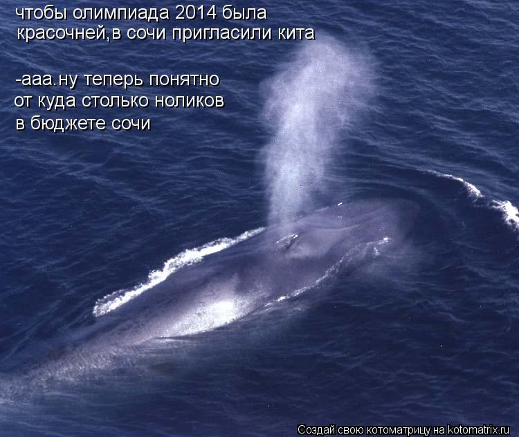 Котоматрица: чтобы олимпиада 2014 была  -ааа.ну теперь понятно  красочней,в сочи пригласили кита от куда столько ноликов  в бюджете сочи