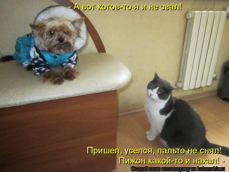 Котоматрица: Пришел, уселся, пальто не снял! Пижон какой-то и нахал! - - А вот котов-то я и не звал!
