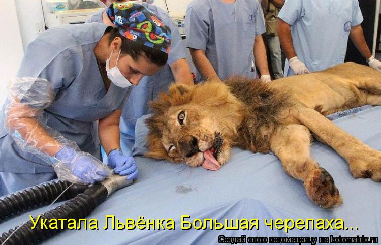Котоматрица: Укатала Львёнка Большая черепаха...
