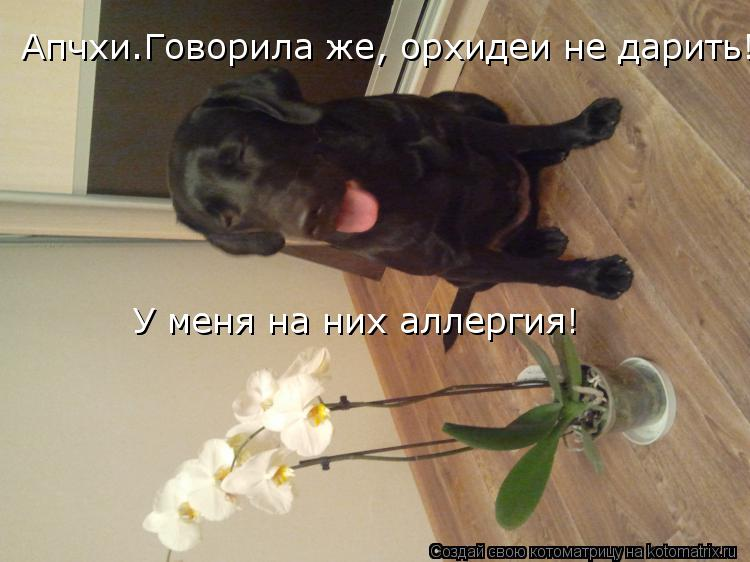 Котоматрица: Апчхи.Говорила же, орхидеи не дарить! У меня на них аллергия!  У меня на них аллергия!