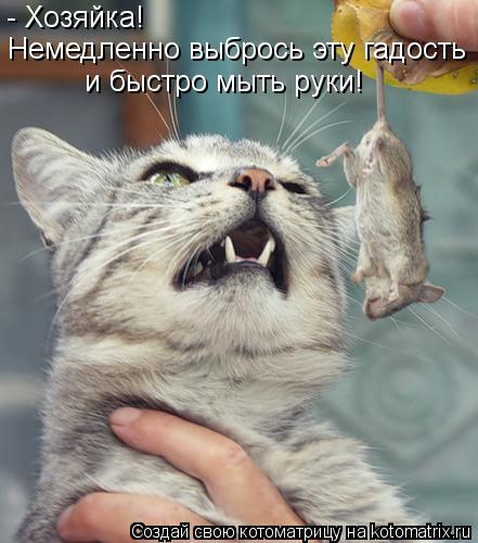 Котоматрица: - Хозяйка!  Немедленно выбрось эту гадость  и быстро мыть руки!