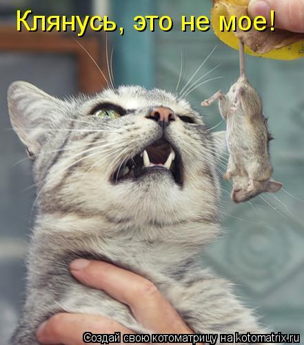 Котоматрица: Клянусь, это не мое!