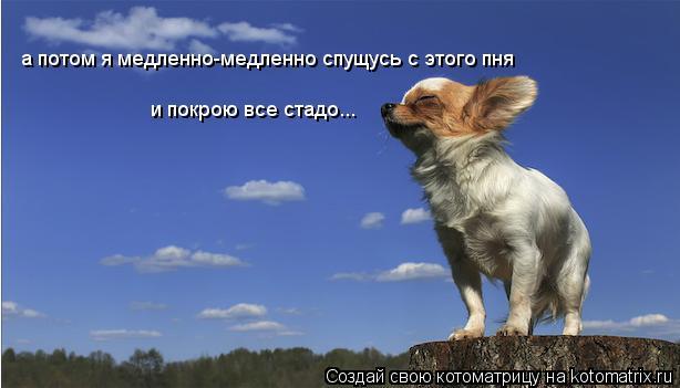 Котоматрица: а потом я медленно-медленно спущусь с этого пня и покрою все стадо...