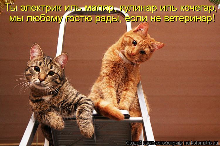 Котоматрица: Ты электрик иль маляр, кулинар иль кочегар, мы любому гостю рады, если не ветеринар!