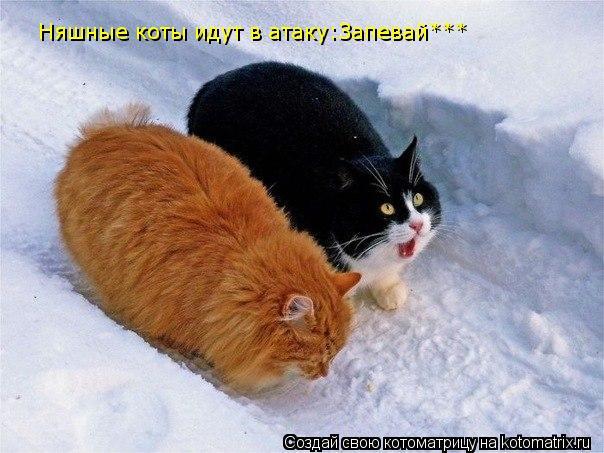 Котоматрица: Няшные коты идут в атаку:Запевай***