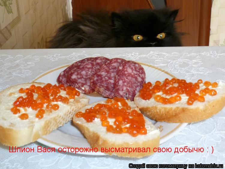 Котоматрица: Шпион Вася осторожно высматривал свою добычю : )