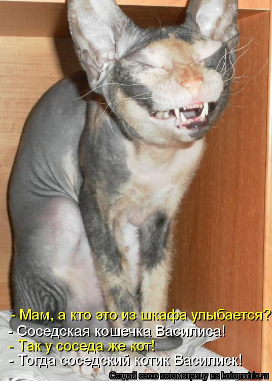 Котоматрица: - Тогда соседский котик Василиск! - Так у соседа же кот! - Соседская кошечка Василиса!  - Мам, а кто это из шкафа улыбается?