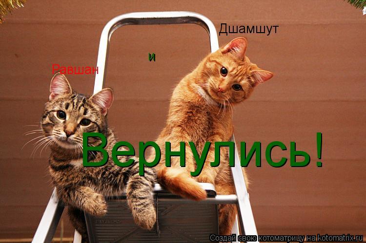 Котоматрица: Равшан Дшамшут и Вернулись!