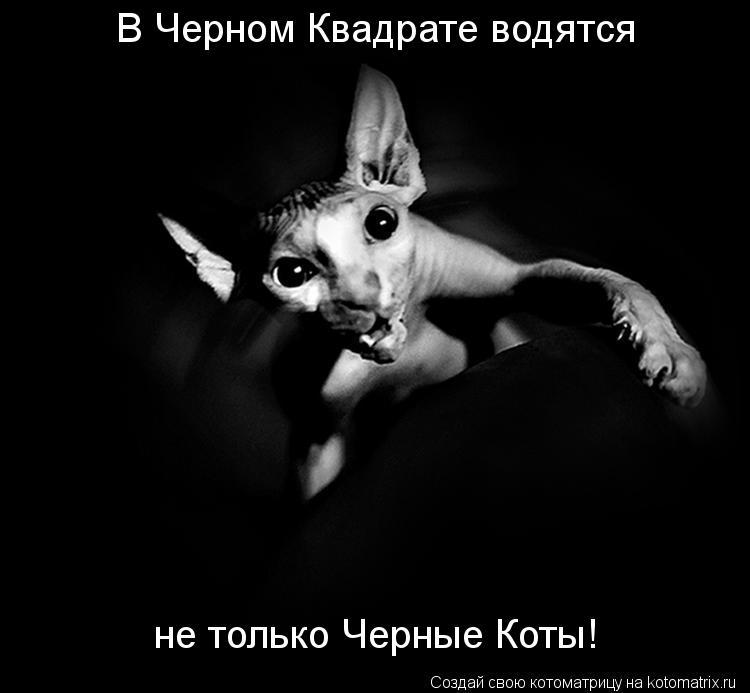 Котоматрица: В Черном Квадрате водятся  не только Черные Коты!