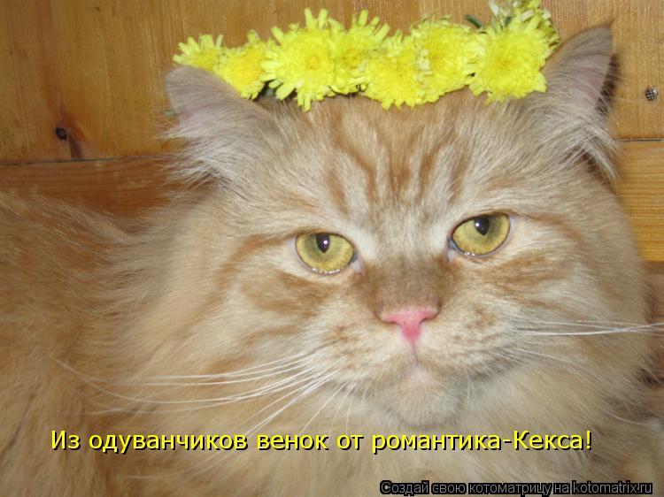 Котоматрица: Из одуванчиков венок от романтика-Кекса!