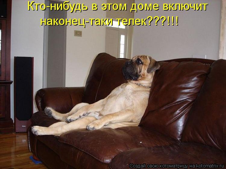Котоматрица: Кто-нибудь в этом доме включит наконец-таки телек???!!!