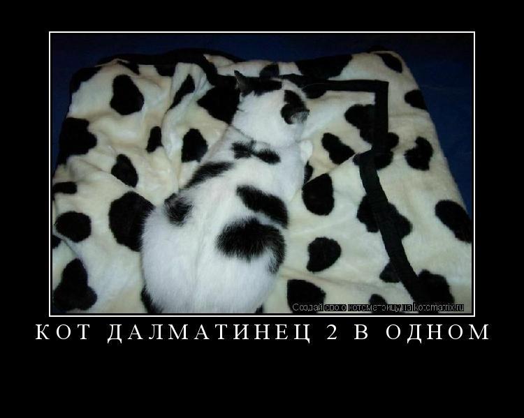 Котоматрица: Кот далматинец 2 в одном
