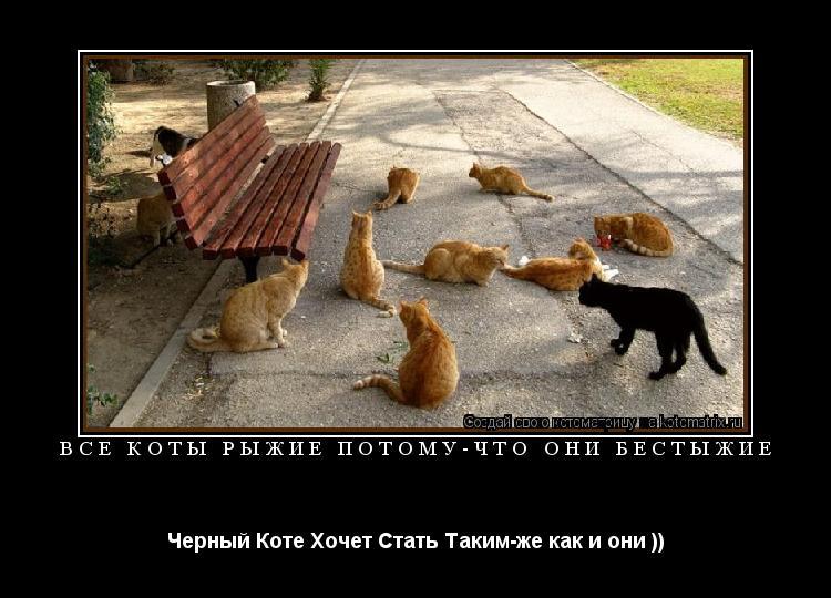 Котоматрица: Все Коты Рыжие Потому-что они бестыжие  Черный Коте Хочет Стать Таким-же как и они ))