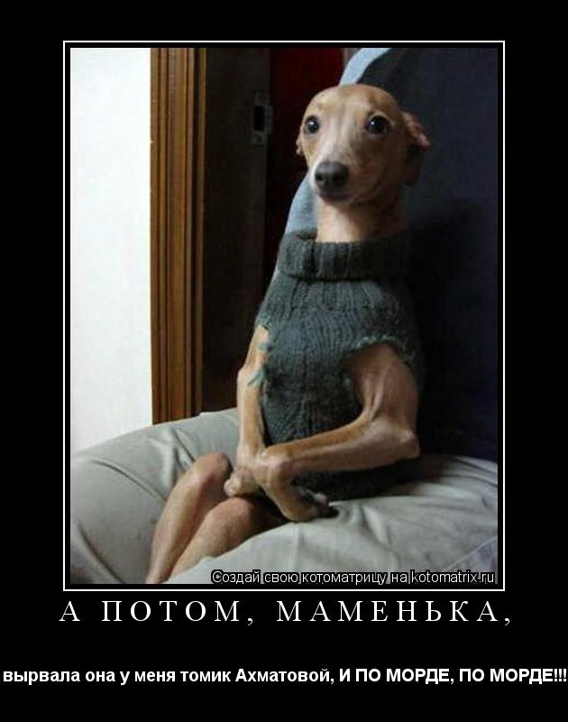Котоматрица: А потом, маменька, вырвала она у меня томик Ахматовой, И ПО МОРДЕ, ПО МОРДЕ!!!