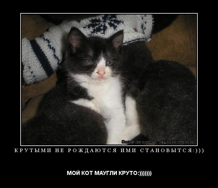 Котоматрица: Крутыми не рождаются ими становытся:))) МОЙ КОТ МАУГЛИ КРУТО:)))))))