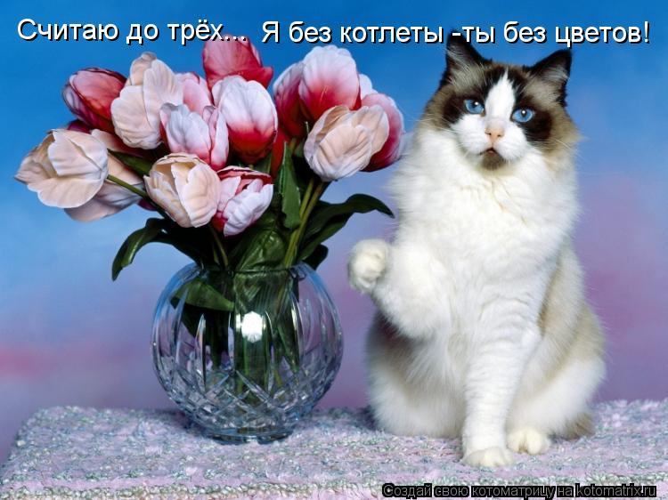 Котоматрица: Считаю до трёх... Я без котлеты -ты без цветов!