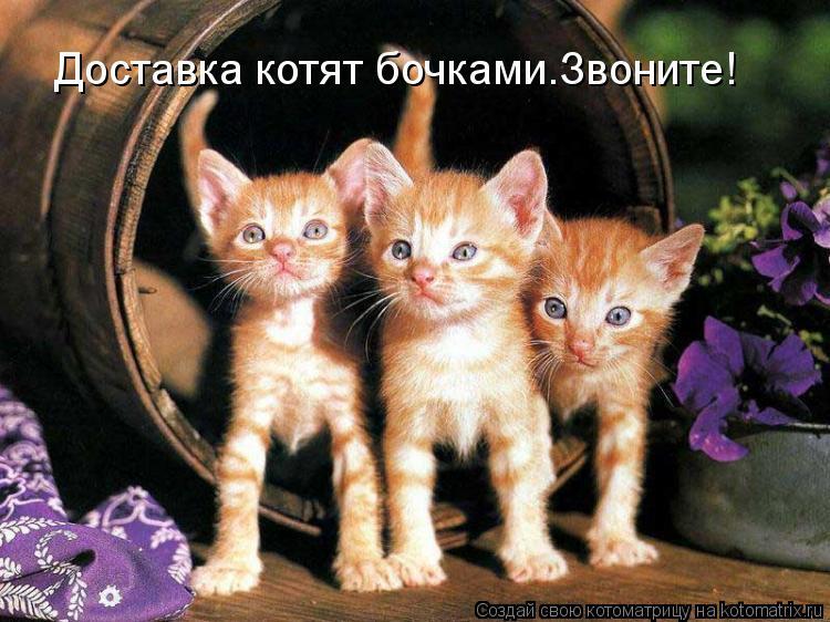 Котоматрица: Доставка котят бочками.Звоните!