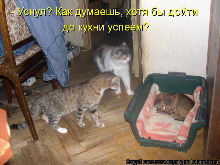 Котоматрица: - Уснул? Как думаешь, хотя бы дойти до кухни успеем?