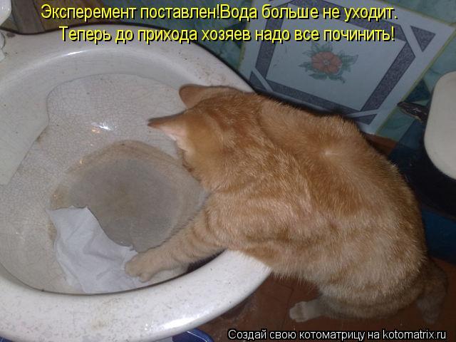 Котоматрица: Эксперемент поставлен!Вода больше не уходит. Теперь до прихода хозяев надо все починить!