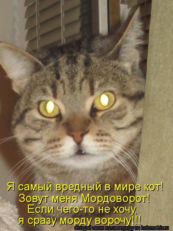 Котоматрица: Я самый вредный в мире кот! Зовут меня Мордоворот! Если чего-то не хочу, я сразу морду ворочу!!!