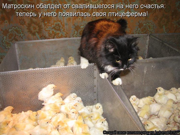 Котоматрица: Матроскин обалдел от свалившегося на него счастья: теперь у него появилась своя птицеферма!