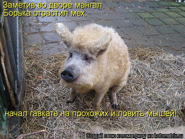 Котоматрица: Заметив во дворе мангал,  Борька отрастил мех,  начал гавкать на прохожих и ловить мышей!