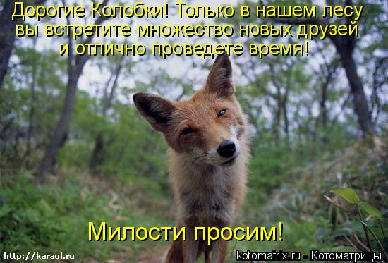 Котоматрица: Дорогие Колобки! Только в нашем лесу вы встретите множество новых друзей и отлично проведете время! Милости просим!