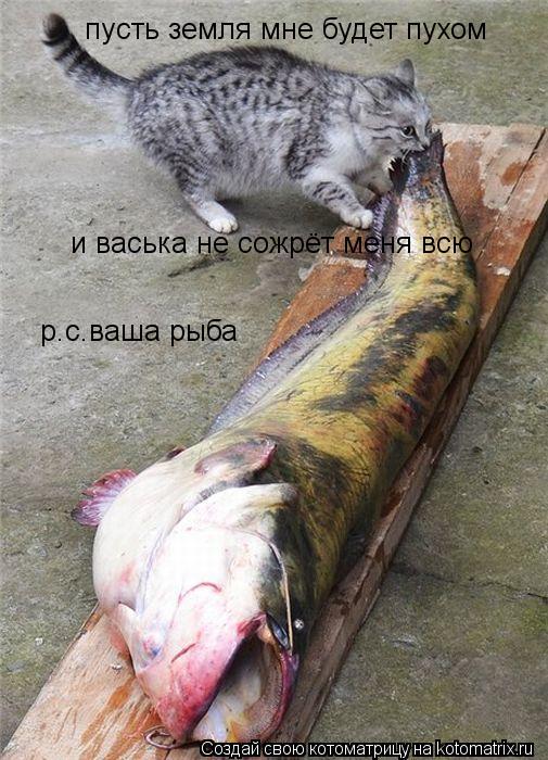 Котоматрица: пусть земля мне будет пухом и васька не сожрёт меня всю р.с.ваша рыба
