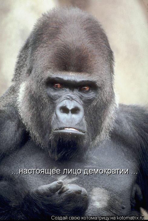 Котоматрица: ...настоящее лицо демократии ...