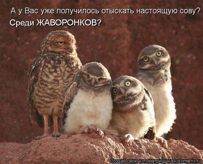 Котоматрица: А у Вас уже получилось отыскать настоящую сову? Среди ЖАВОРОНКОВ?