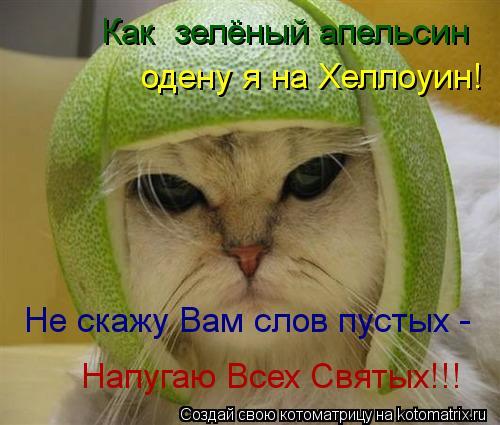 Котоматрица: Как  зелёный апельсин  одену я на Хеллоуин! Не скажу Вам слов пустых - Напугаю Всех Святых!!!