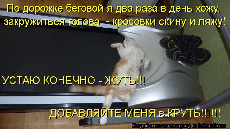 Котоматрица: По дорожке беговой я два раза в день хожу, закружиться голова, - кросовки скину и ляжу! УСТАЮ КОНЕЧНО - ЖУТЬ!!! ДОБАВЛЯЙТЕ МЕНЯ в КРУТЬ!!!!!!