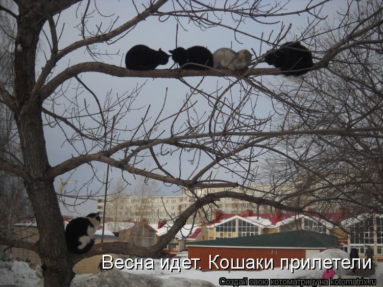 Котоматрица: Весна идет. Кошаки прилетели