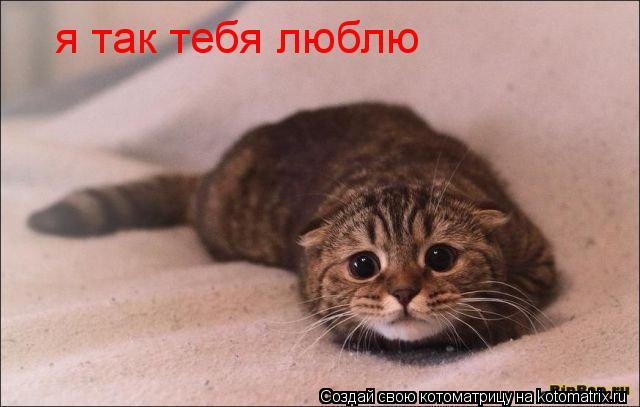 Котоматрица: я так тебя люблю