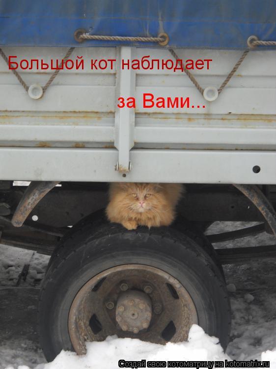 Котоматрица: Большой кот наблюдает за Вами...