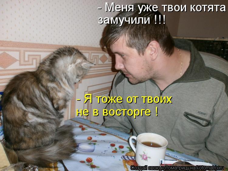 Котоматрица: - Меня уже твои котята задолбали ! замучили !!! - Я тоже от твоих не в восторге !