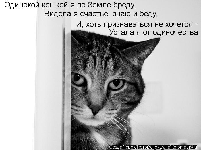Котоматрица: Одинокой кошкой я по Земле бреду.  Видела я счастье, знаю и беду.  И, хоть признаваться не хочется -  Устала я от одиночества.