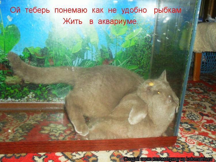 Котоматрица: Ой  теберь  понемаю  как  не  удобно   рыбкам    Жить   в  аквариуме.
