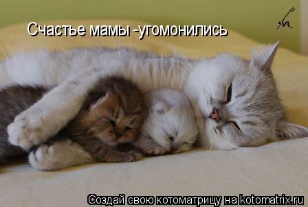 Котоматрица: Счастье мамы -угомонились