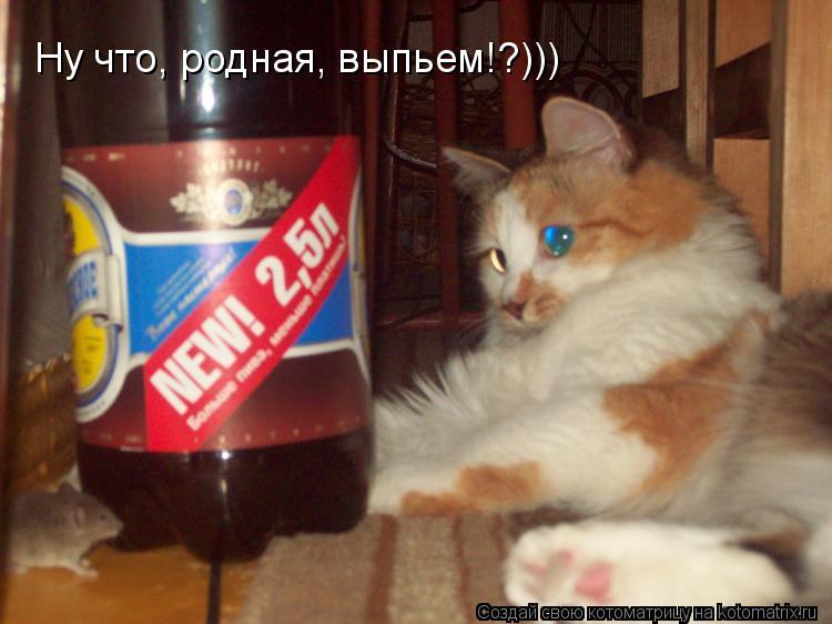 Котоматрица: Ну что, родная, выпьем!?)))