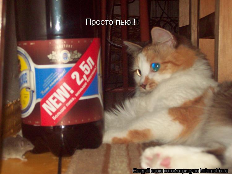 Котоматрица: Просто пью!!!