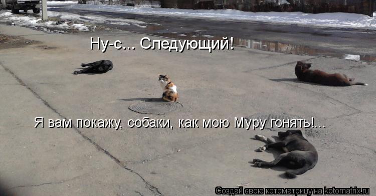 Котоматрица: Ну-с... Следующий! Я вам покажу, собаки, как мою Муру гонять!...